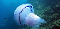 jellyfish-water-amount.jpg