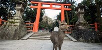 japan-deer-infestation.jpg